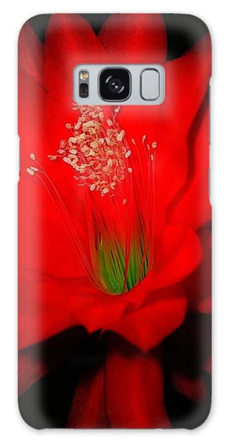 Garden Galaxy S8 Case featuring the photograph Red Flower For You by Juergen Weiss
