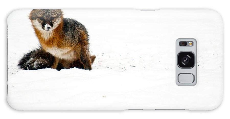 Fox Galaxy S8 Case featuring the photograph Red Fox In The Snow by Douglas Barnett