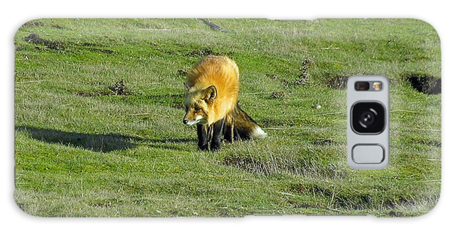 Fox Galaxy S8 Case featuring the photograph Red Fox by Louise Magno