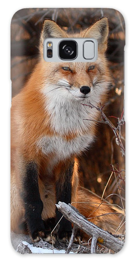 Fox Galaxy S8 Case featuring the photograph Red Fox Pausing Atop Log by Max Allen