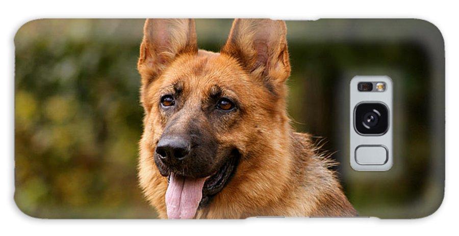 German Shepherd Galaxy S8 Case featuring the photograph Red German Shepherd Dog by Sandy Keeton