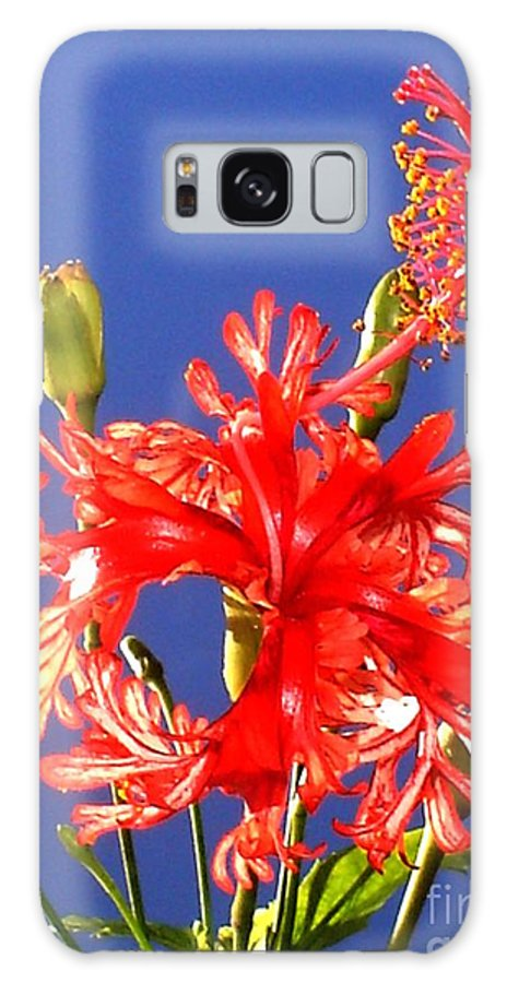 Red Hibiscus Galaxy Case featuring the photograph Red Hibiscus by Chandelle Hazen