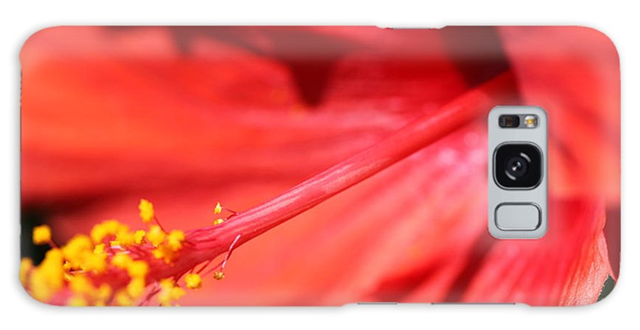 Red Galaxy S8 Case featuring the photograph Red Hibiscus by Nadine Rippelmeyer