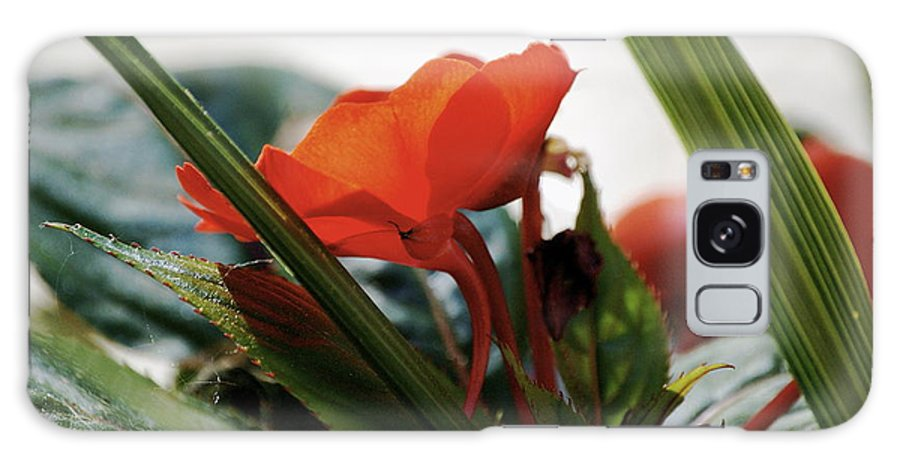 Impatiens Galaxy S8 Case featuring the photograph Red Impatiens by Faith Harron Boudreau
