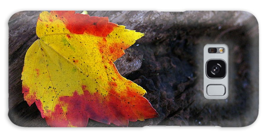 Leaf Galaxy S8 Case featuring the photograph Red Maple Leaf On Old Log by Anna Lisa Yoder