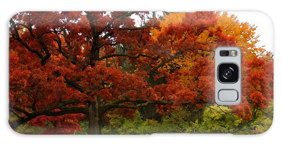 Oak Tree Leaves Red Orange Green Nature Outdoors Arboretum Foliage Grass Trunk Mighty Beauty Natural Flora Botanical Fall Autumn Autumnal Seasonal Landscape Park Galaxy S8 Case featuring the photograph Red Oak by Lyle Hatch