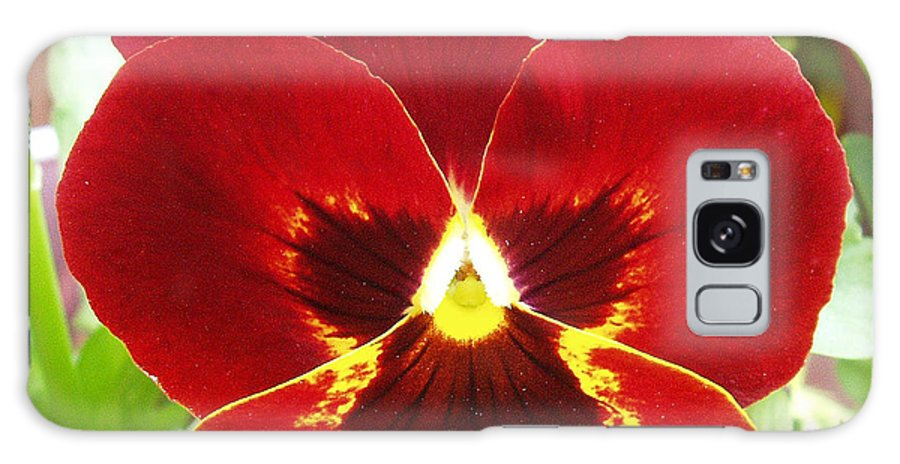 Red Galaxy S8 Case featuring the photograph Red Pansy by Nancy Mueller