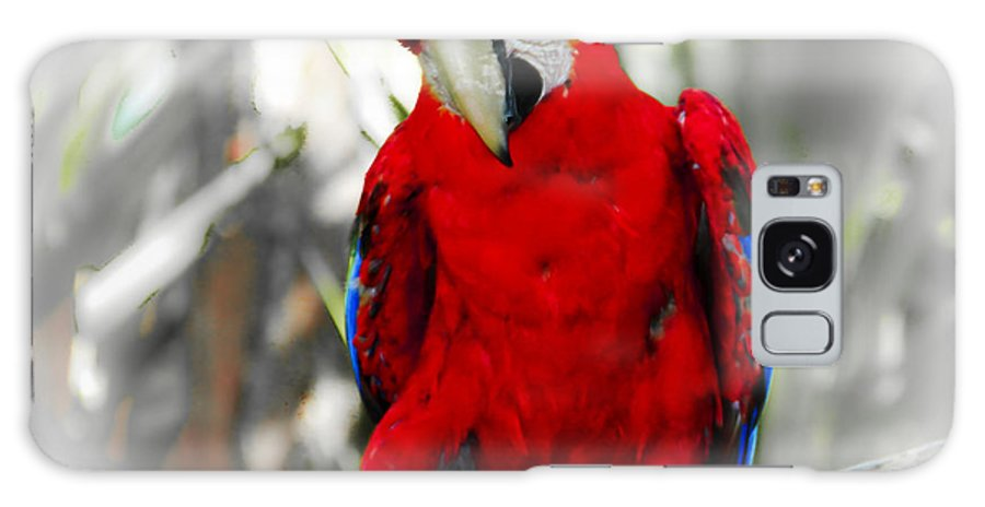 Brevard Zoo Galaxy S8 Case featuring the photograph Red Parrot by Roger Wedegis