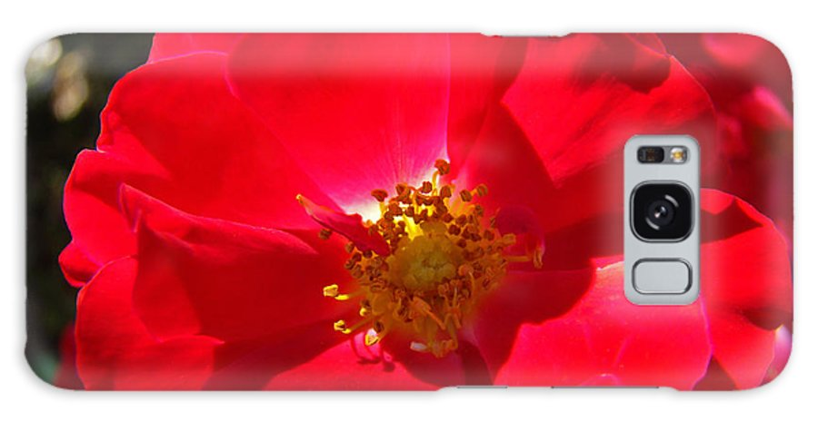 Rose Galaxy S8 Case featuring the photograph Red Rose Art Print Sunlit Roses Botanical Giclee Baslee Troutman by Baslee Troutman