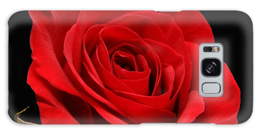Red Galaxy S8 Case featuring the photograph Red Rose On Black 1 by George Jones