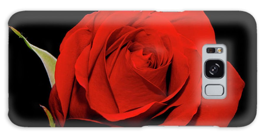 Red Galaxy S8 Case featuring the photograph Red Rose On Black 2 by George Jones