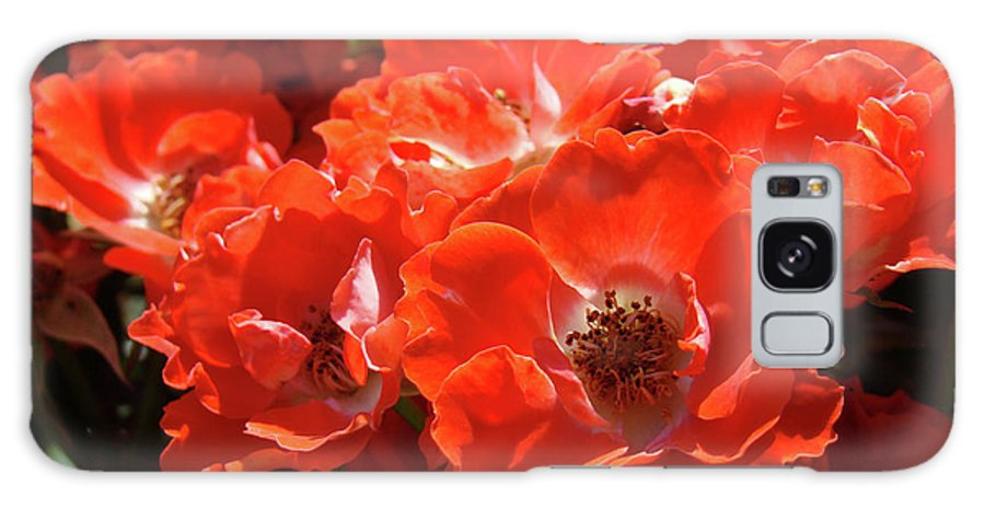 Rose Galaxy S8 Case featuring the photograph Red Roses Botanical Landscape 1 Red Rose Giclee Prints Baslee Troutman by Baslee Troutman