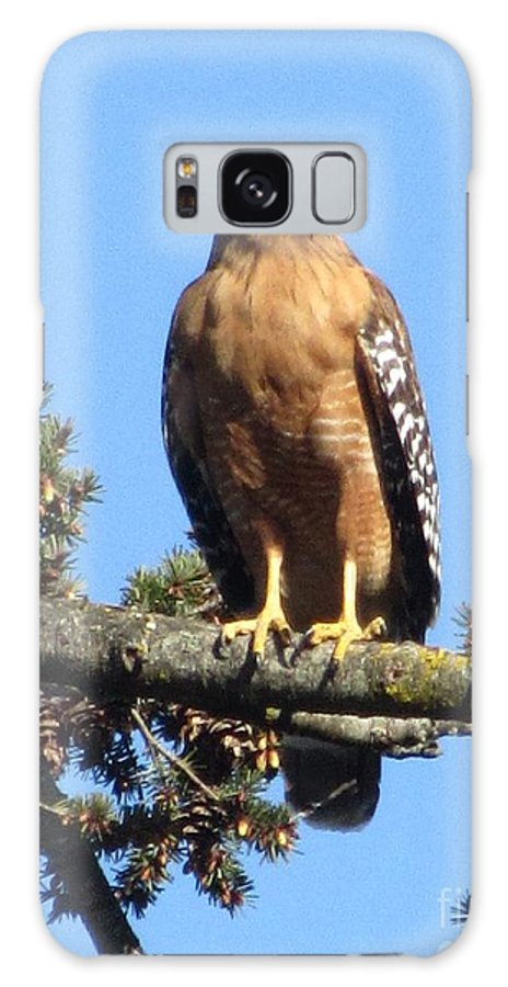 Bird Galaxy S8 Case featuring the photograph Red Shouldered Hawk by Cassandra Geernaert