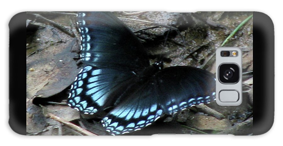 Butterfly Galaxy S8 Case featuring the photograph Red Spotted Purple Swallowtail Butterfly by Donna Brown