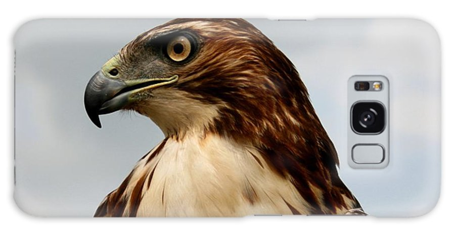 Hawk Galaxy Case featuring the photograph Red Tail Hawk 1 by David Dunham