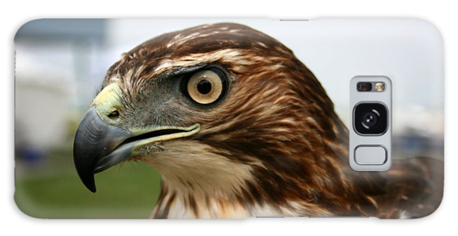 Hawk Galaxy Case featuring the photograph Red Tail Hawk 3 by David Dunham