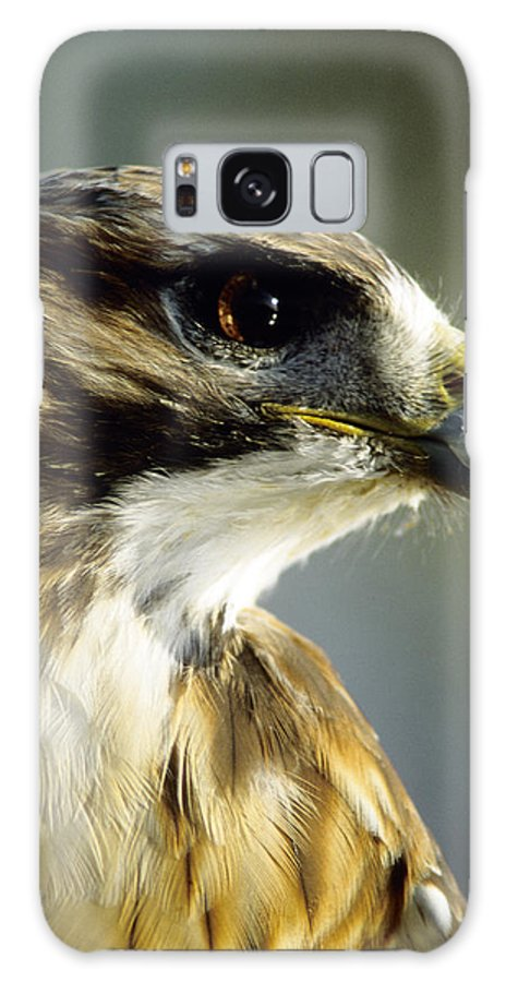 Hawk Galaxy Case featuring the photograph Red Tail Hawk by Steve Somerville