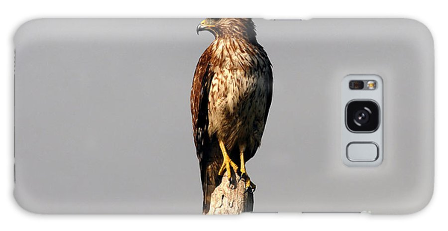 Red Tailed Hawk Galaxy S8 Case featuring the photograph Red Tailed Hawk by David Lee Thompson