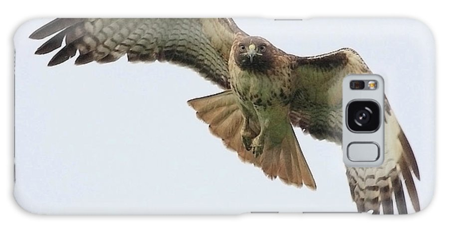 Red Tail Hawk Galaxy S8 Case featuring the photograph Red Tailed Hawk Finds Its Prey by Wingsdomain Art and Photography