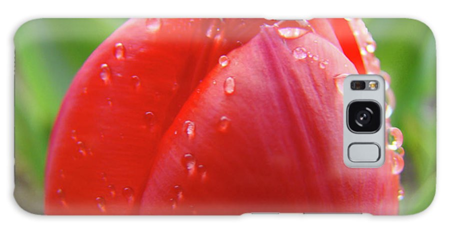 �tulips Artwork� Galaxy S8 Case featuring the photograph Red Tulip Flower Macro Artwork 16 Floral Flowers Art Prints Spring Dew Drops Nature Art by Baslee Troutman