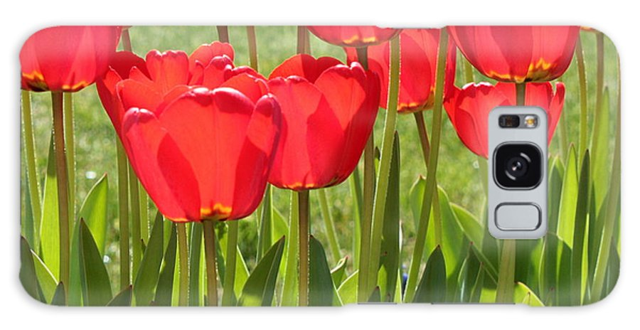 Red Tulips Galaxy S8 Case featuring the photograph Red Tulips Square by Carol Groenen