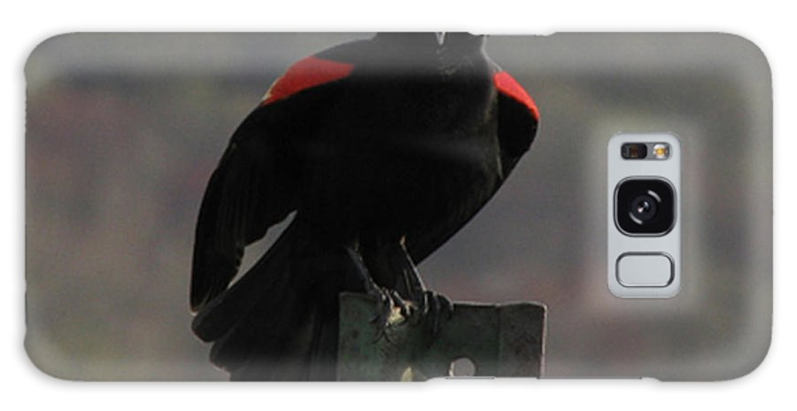Bird Galaxy S8 Case featuring the photograph Red Winged Black Bird by Donna Brown