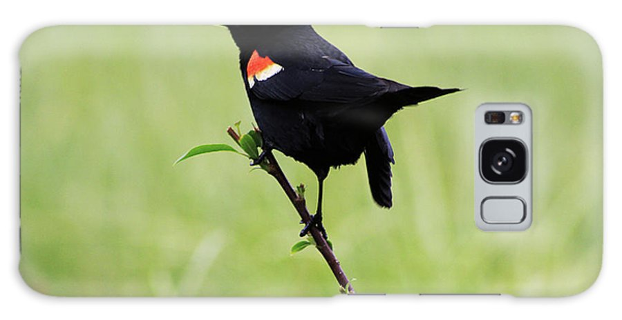 Bird Galaxy S8 Case featuring the photograph Red Winged Blackbird by Alyce Taylor