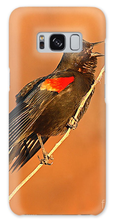 Blackbird Galaxy Case featuring the photograph Red-winged Blackbird Belting Out Spring Song by Max Allen