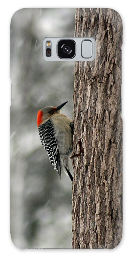 Bird Galaxy S8 Case featuring the photograph Redheaded Woodpecker by George Jones