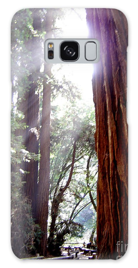 Redwoods Galaxy S8 Case featuring the photograph Redwood Sunlight by Mary Rogers