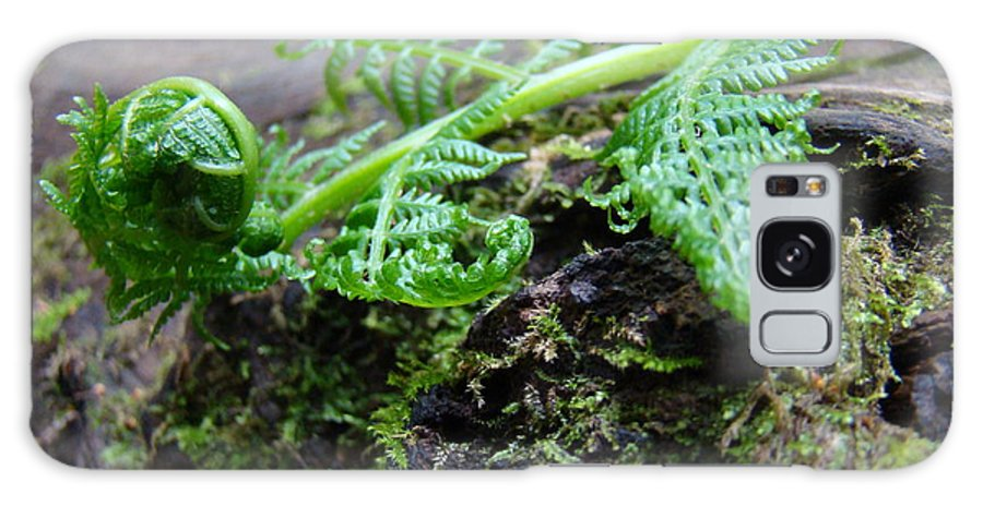 Fern Galaxy S8 Case featuring the photograph Redwood Tree Forest Fern Art Prints Ferns Giclee Baslee Trouman by Baslee Troutman