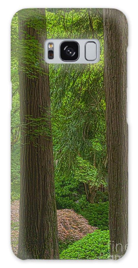 Rose Garden Galaxy S8 Case featuring the photograph Redwoods #2 by John Stuart