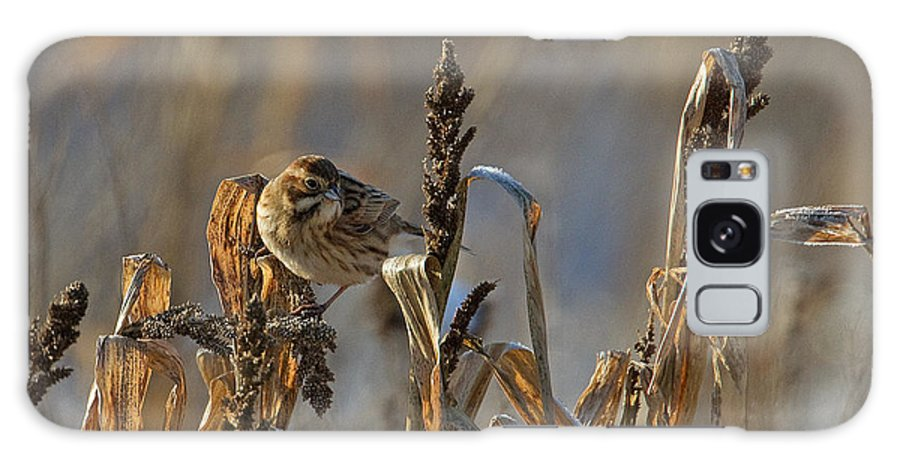 Reed Bunting Galaxy S8 Case featuring the photograph Reed Bunting by Bob Kemp
