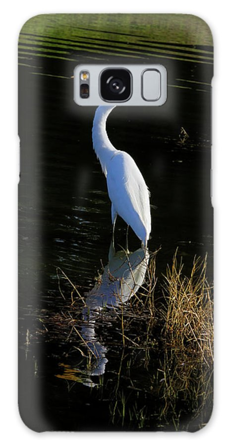 Giant Egret Galaxy S8 Case featuring the photograph Reflections Of Beauty by Deborah Benoit