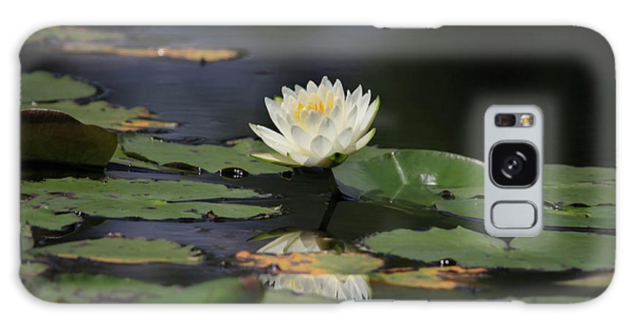 Lilly Galaxy S8 Case featuring the photograph Reflective Lilly by Deborah Benoit