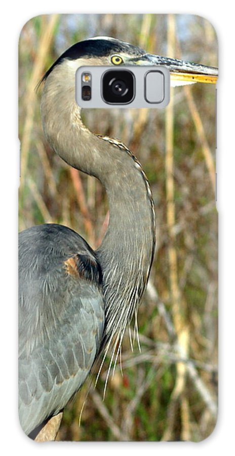 Heron Galaxy S8 Case featuring the photograph Regal Heron by Marty Koch