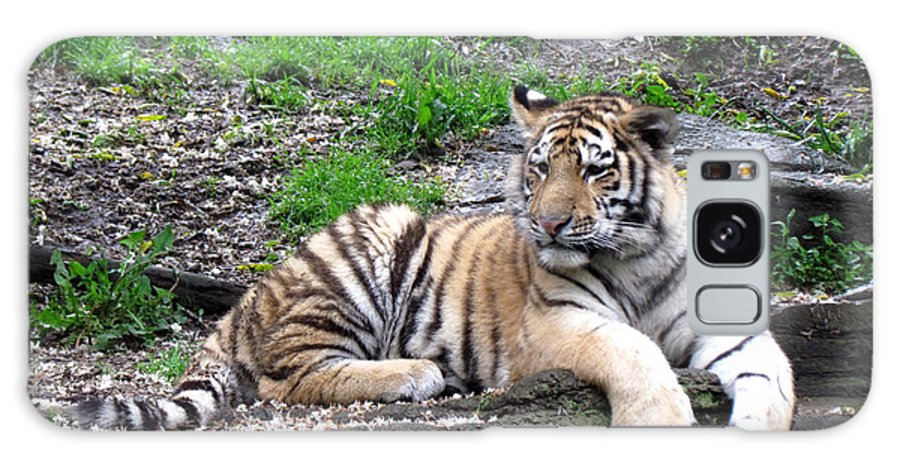 Tiger Galaxy S8 Case featuring the photograph Relaxed Tiger Cub by George Jones