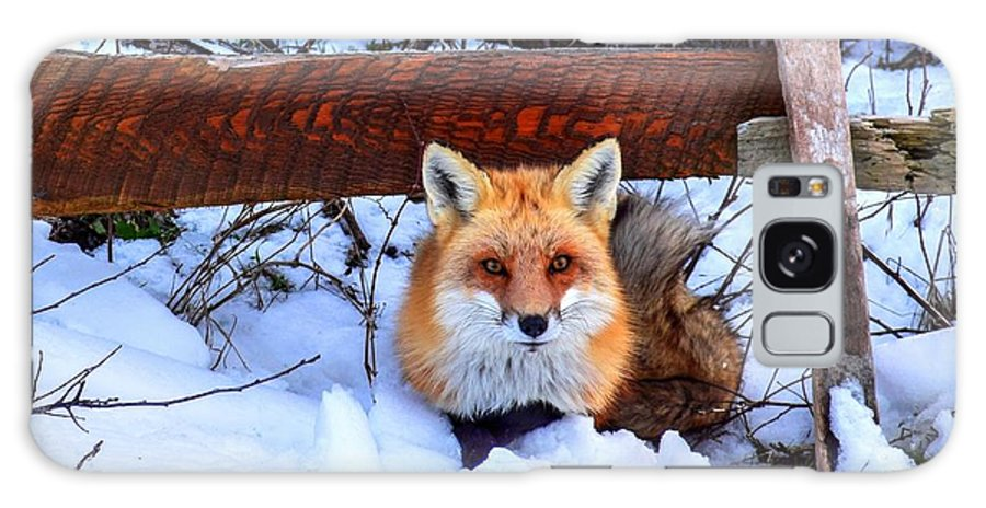 Fox Galaxy S8 Case featuring the photograph Resting Fox by Bob Cuthbert