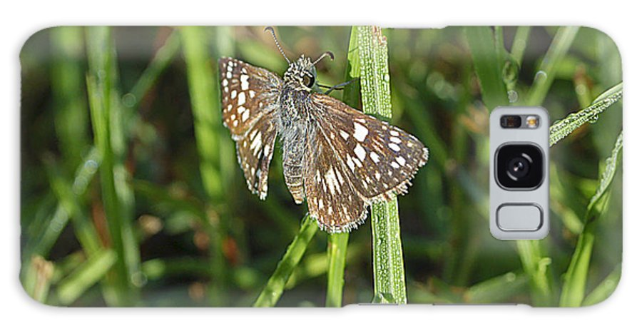 Butterfly Galaxy S8 Case featuring the photograph Reversed Roadside Skipper by Kenneth Albin
