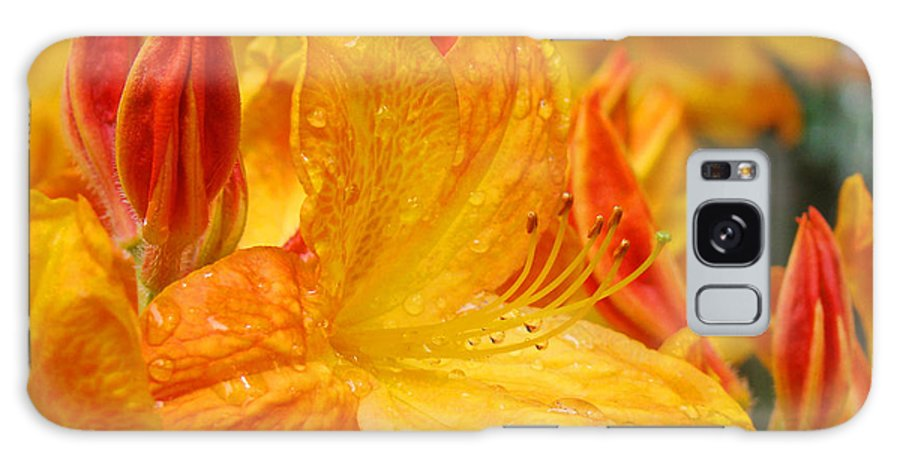 Rhodie Galaxy S8 Case featuring the photograph Rhodies Orange Yellow Rhododendrons Art Prints Canvas Baslee Troutman by Baslee Troutman