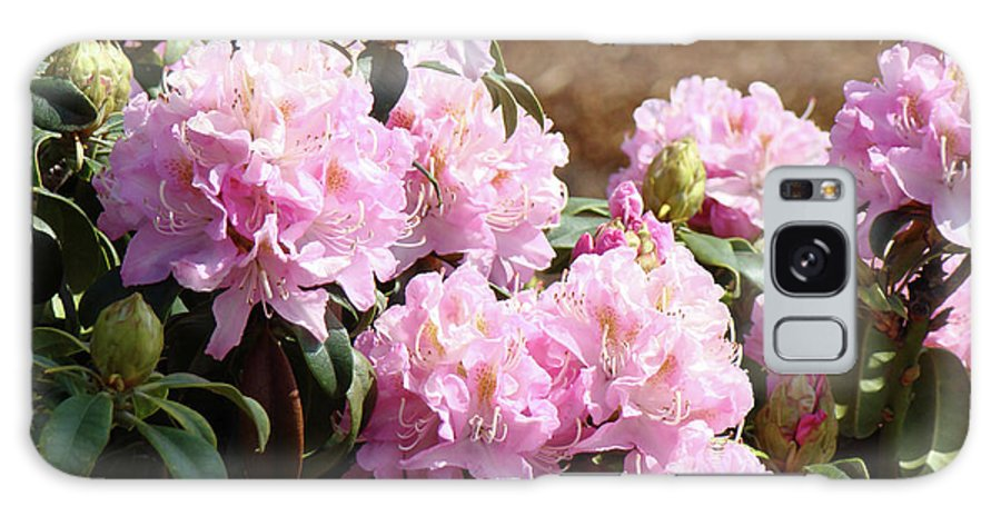 Rhodie Galaxy S8 Case featuring the photograph Rhododendron Flower Garden Art Prints Canvas Pink Rhodies Baslee Troutman by Baslee Troutman