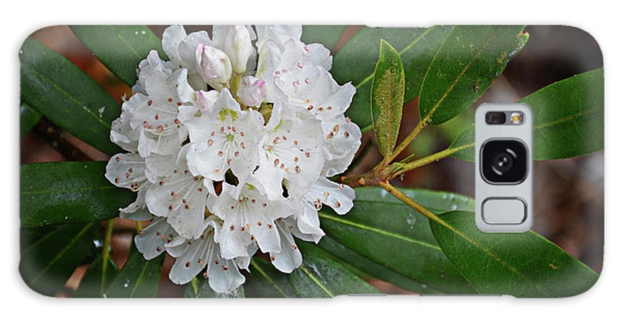 Joshua Mimbs Galaxy S8 Case featuring the photograph Rhododendron by FineArtRoyal Joshua Mimbs