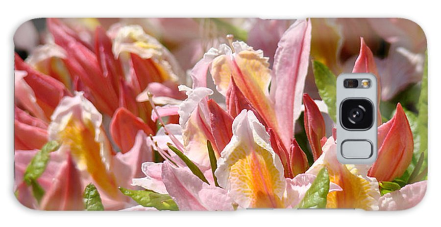Rhodie Galaxy S8 Case featuring the photograph Rhododendrons Floral Art Prints Canvas Pink Orange Rhodies Baslee Troutman by Baslee Troutman