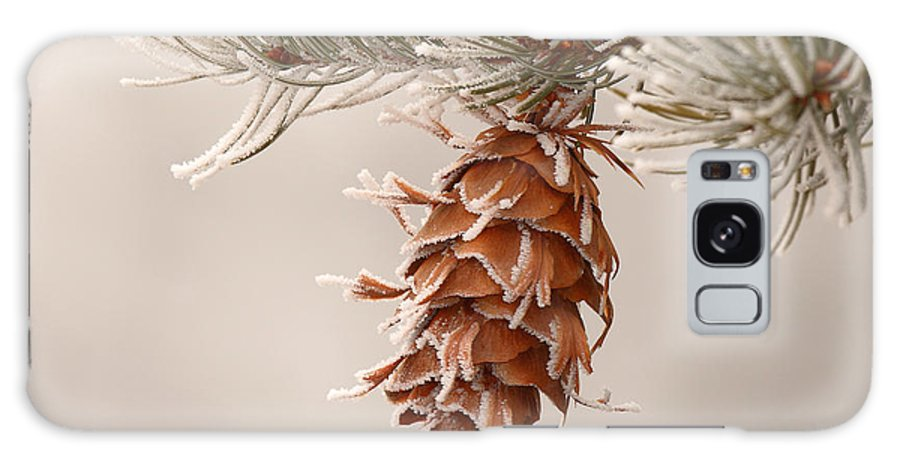 Spruce Galaxy S8 Case featuring the photograph Rime Ice Lightly Clinging To Spruce Cone by Max Allen