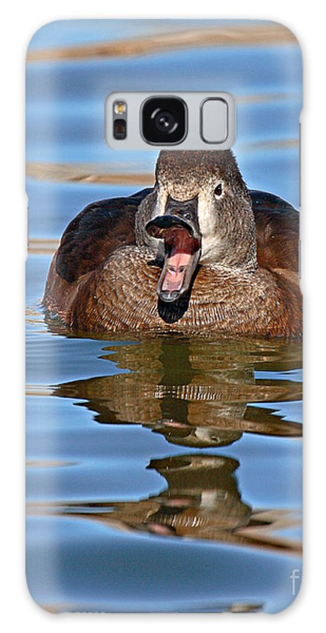 Duck Galaxy Case featuring the photograph Ring-necked Duck Spring Call by Max Allen