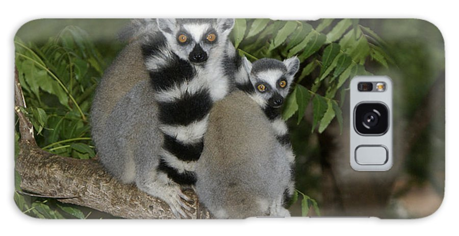 Madagascar Galaxy S8 Case featuring the photograph Ring-tailed Lemurs by Michele Burgess