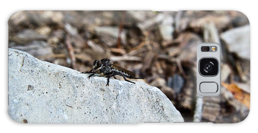 Sitting Galaxy S8 Case featuring the photograph Robber Fly Sitting by Douglas Barnett