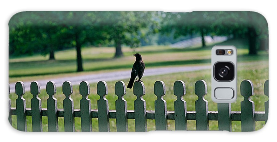 Bird Galaxy Case featuring the photograph Robin On A Fence by Lone Dakota Photography
