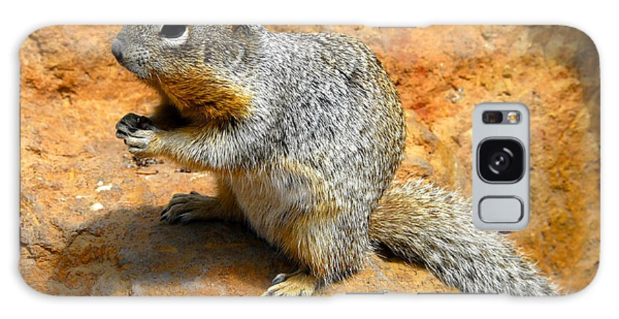 Rock Squirrel Galaxy S8 Case featuring the photograph Rock Squirrel by David Lee Thompson