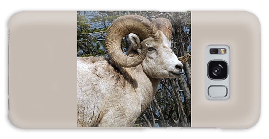 Wildlife Galaxy Case featuring the photograph Rocky Mountain Ram by Tiffany Vest